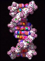 About 12 base pairs of a vertical right handed DNA molecule in an image by Paul Theissan.  The molecule phosphates have red spiral stripes, the molecule base atoms have a variety of rainbow colors.  The effect is that the DNA looks like very tasty candy.