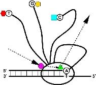 nanotechnology: Medusa(TM) Sequencer