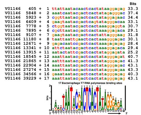 alignment of all 17 bacteriphage T7 promoters above a sequence logo of them