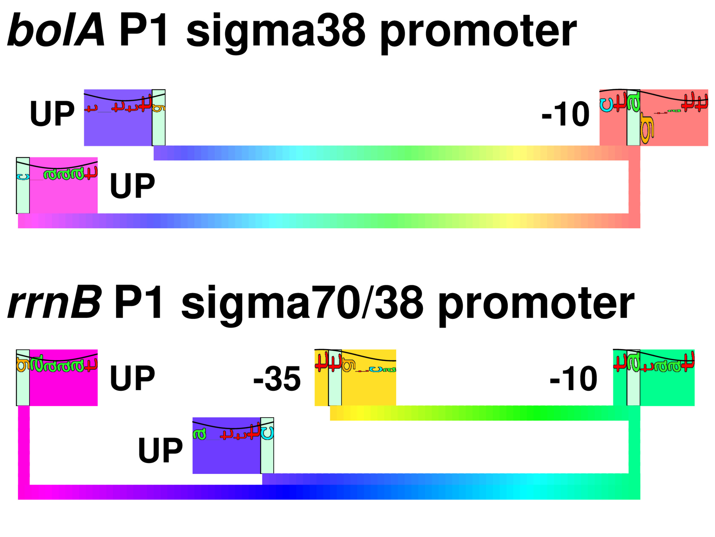Proposed cover figure for sigma38 paper showing sequence logos and walker for several genes